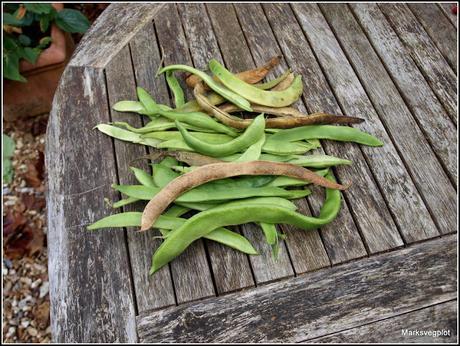 Bye Bye Beans!