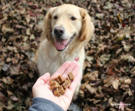 nutritious and soft superfood dog treats made with pumpkin and butternut squash