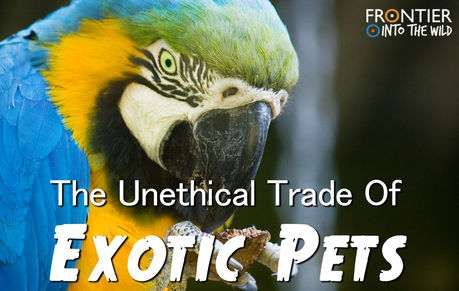 The Unethical Trade of Exotic Pets