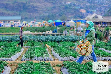 Baguio Tourist Spots Strawberry Farm