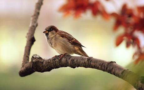 sparrow-tree-branch-bird