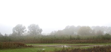 Misty Floodplain Forest