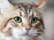Things COOL FACTS About Your Cat's Whiskers