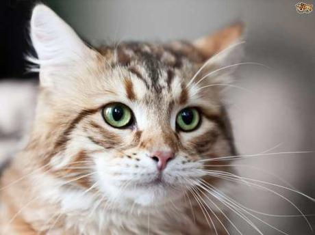 4 things COOL FACTS about your Cat's Whiskers