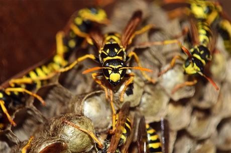 8 Easy Steps to Avoid Pest Infestations