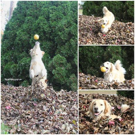 Golden Fall Fun in the Leaves