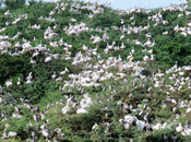 Volery Birds Uppalapadu Bird Sanctuary, Guntur
