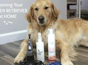 Tips Keep Your Golden Retriever Groomed Between Appointments