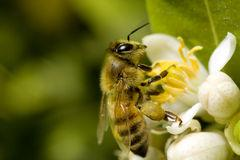 10 Proven Powerful Benefits of Bee Pollen
