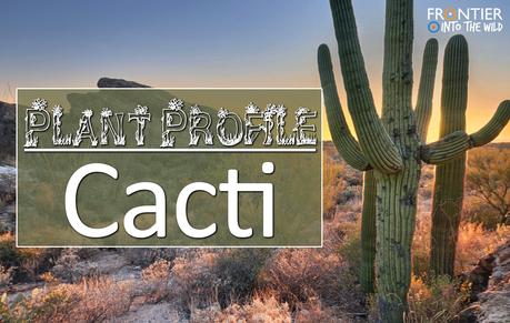 Plant Profile - Cacti