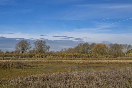 Blue Skies over the Floodplain Forest