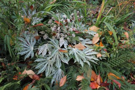 Foliage Follow Up