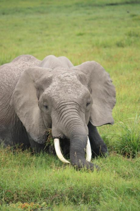 DAILY PHOTO: Young Tusker in the Marsh