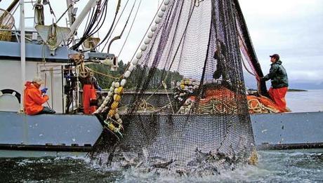 salmon fisheries