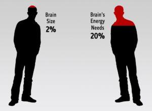 How much energy does the brain use?