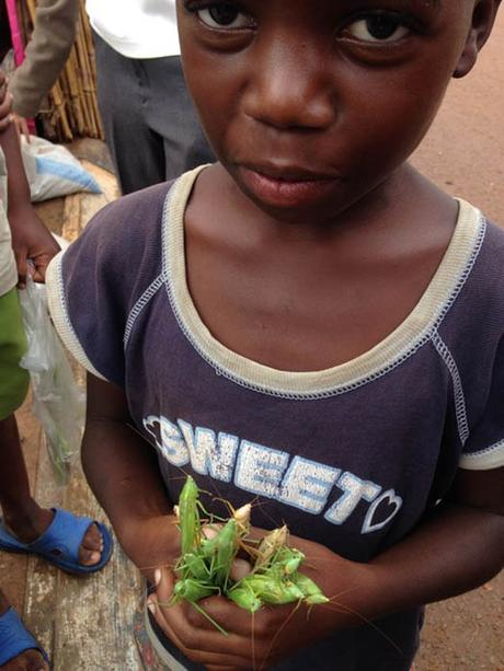 boy holding nsenene grasshoppers