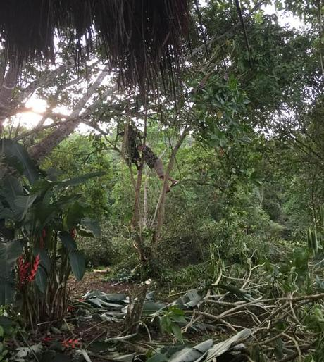 tree cutting Sunbird Hill, Kibale with Malcolm Wilson