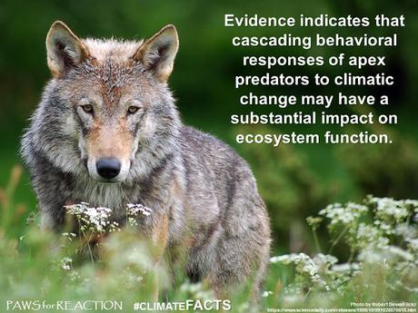 #ClimateFacts series: #ClimateChange #Science #Wolves