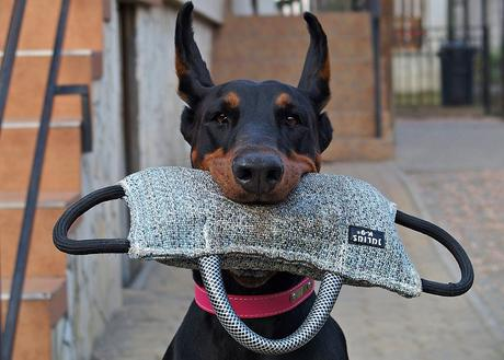 Dog Training Tips That Work well For Smart Dogs
