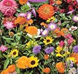 Image: Hirts Wildflower Seeds - 1000+ Low Growing - Our Wildflower mixes are specially formulated to provide waves of beautiful color and low-maintenance beauty