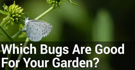 How To Distinguish Good Bugs From Bad Bugs In The Garden