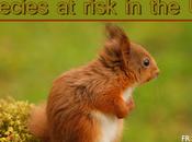 Species Risk