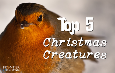 Top 5 Christmas Creatures