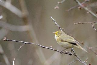Britain's birds - winners and losers