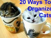 Brilliant Ways Organize Your Cats