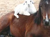 Horse's Best Friend Isn't Scapegoat