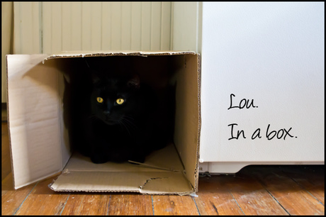 Wordless Wednesday: cat in a box