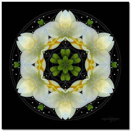 The Joy Inside - Flower Mandala Art