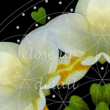 The Joy Within - flower mandala detail