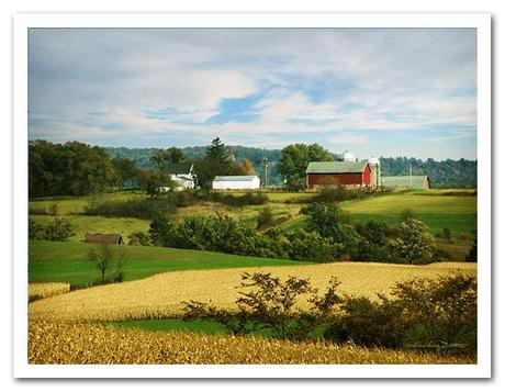 Storybook Farm, a classic farm, red barn, and golden cornfields ready for harvest.