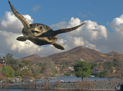 Flying Turtle photo from Friday Flyer