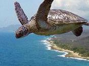 When Turtles Fly?