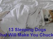 Sleeping Dogs That Will Make Chuckle