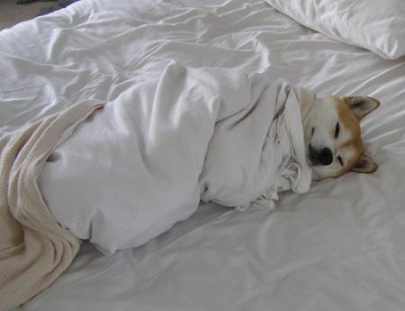 13 Sleeping Dogs That Will Make You