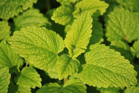 24 Plants That Keep Your Skin Looking Young