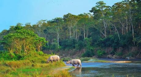 Chitwan_national_park_nepal