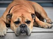 Dealing with Pet's Illness Family