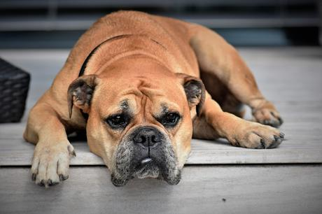 Dealing with a Pet's Illness as a Family