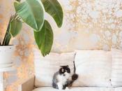 Love: Calico Wallpaper