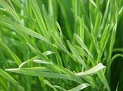 Lemongrass Energy Back