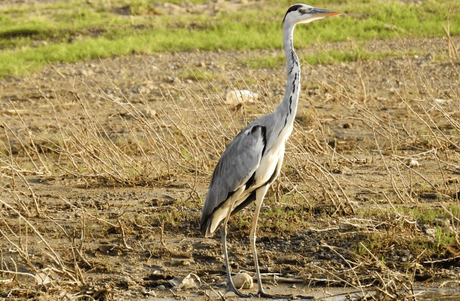 Crane spotted at Chambal river sanctuary