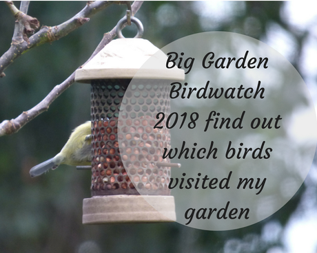 Big Garden Birdwatch results which birds visited my garden