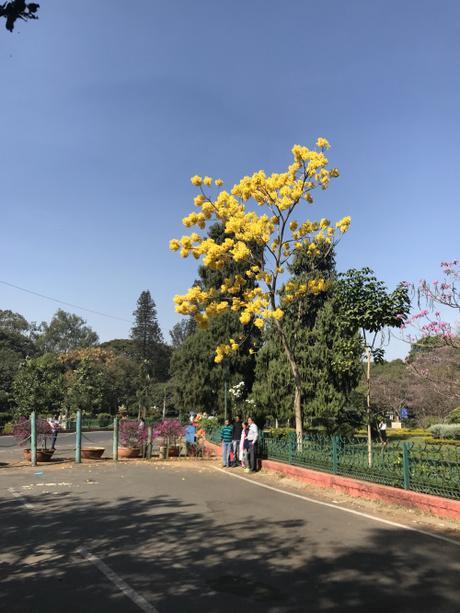 Daily Photo: Yellow