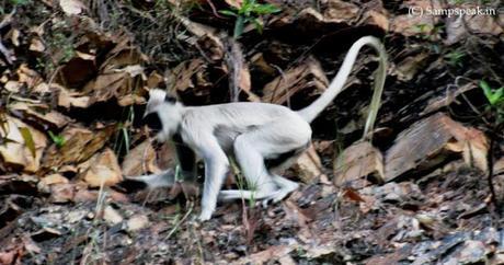 Volkswagen cruel test on monkeys !!