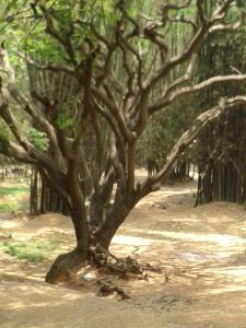 POEM: Tree Talk