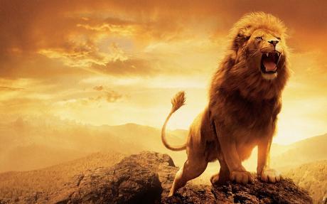 Image result for lion